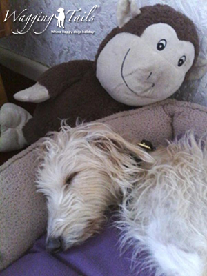 Millie enjoying a relaxing holiday with her cuddly toy monkey.