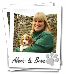 Wagging Tails franchisee, Alexis Bennett with her Beagle puppy, Brea