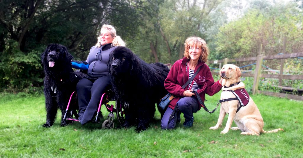 Hearing Dogs for Deaf People volunteer Linda with Fidgey, Julie Andrews and two Newfoundlands