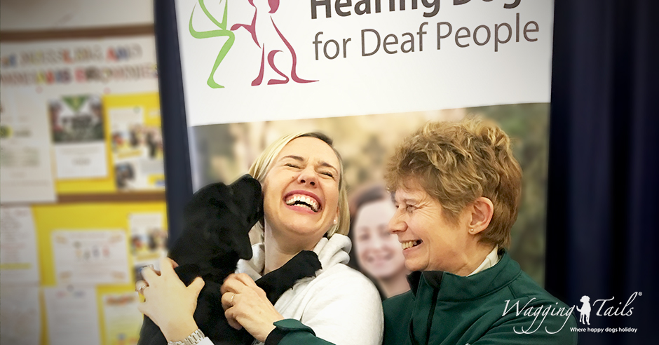 Lisa Suswain and Caroline Harrison of Wagging Tails meet trainee Hearing Dog puppy Neve